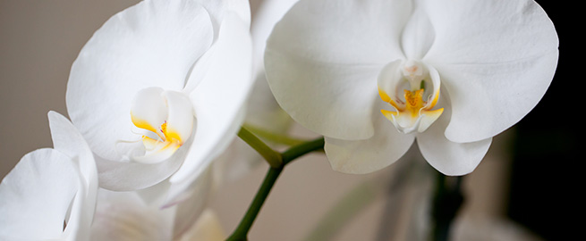 Orchid partners